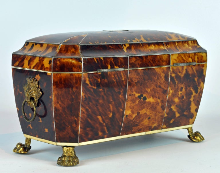 Superior Early 19th Century Georgian Tortoiseshell Tea Caddy on Lion's Paw Feet 3