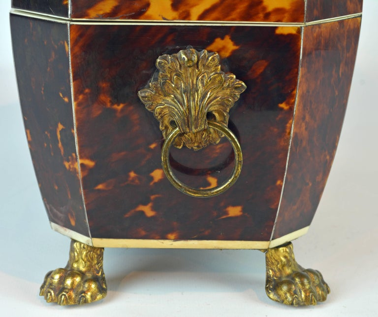 Superior Early 19th Century Georgian Tortoiseshell Tea Caddy on Lion's Paw Feet 10