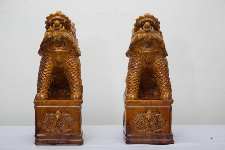 This is a striking pair of Chinese umber glazed porcelain foo lions situated on similar plinths, 20th century.