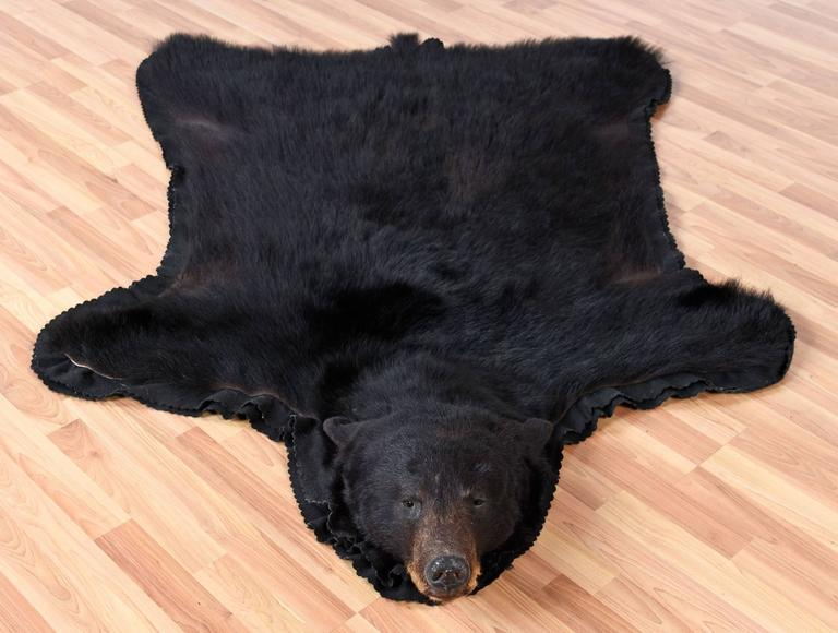 Authentic American Black Bear Skin Rug At 1stdibs