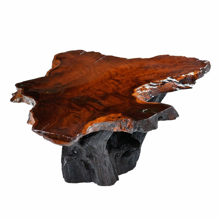 Spectacular vintage live edge cross section slab coffee table. The table has been restored with a newly poured scratch free resin surface. The naturally formed cavities have smoothed over like glass. The edges are raw, unaltered by man. The rugged,