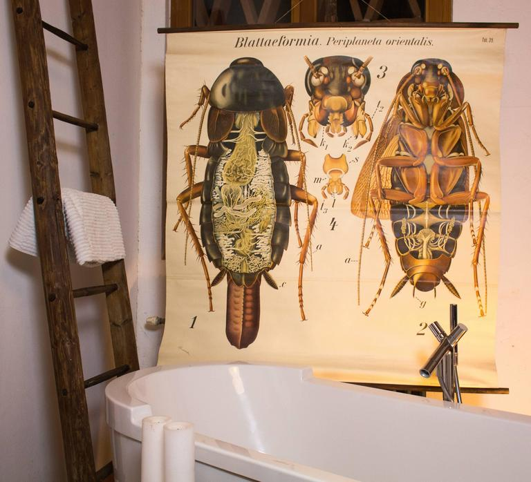 Cockroach Wall Chart by Paul Pfurtscheller, 1920s For Sale at 1stdibs