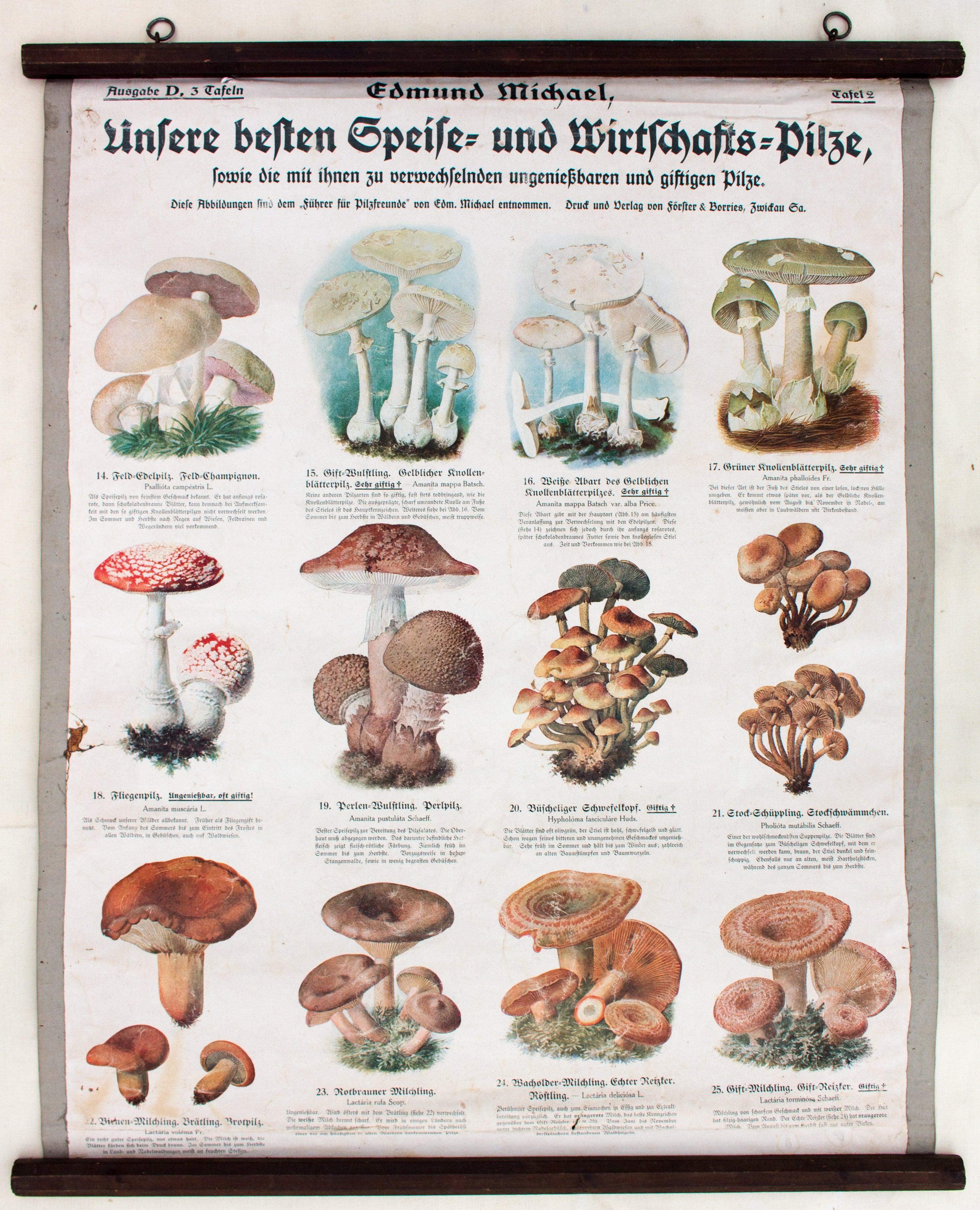 Wall Chart, Mushroom, Part 1 - 3, Three Lithographs, Edmund Michael ...