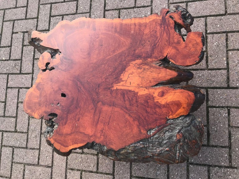 Good Size Midcentury Organical Shape Cherry Burl Coffee Table, Stunning Grain In Good Condition For Sale In Lisse, NL