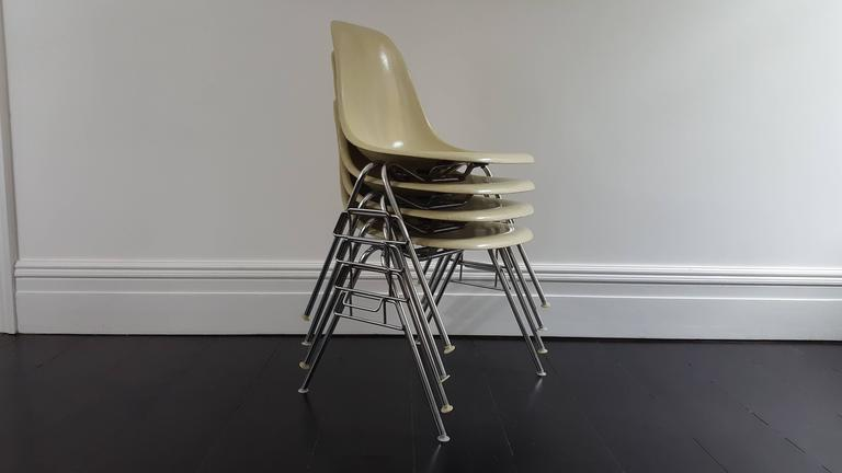 An iconic set of four parchment coloured fibreglass Charles and Ray Eames designed Herman Miller early Fehlbaum production DSX stacking chairs on chromed steel bases. 