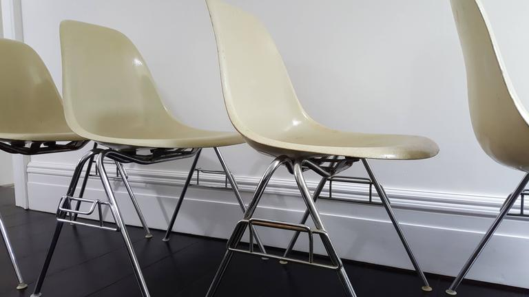 Original Parchment Charles & Ray Eames Fibreglass DSS Chairs for Herman Miller 4