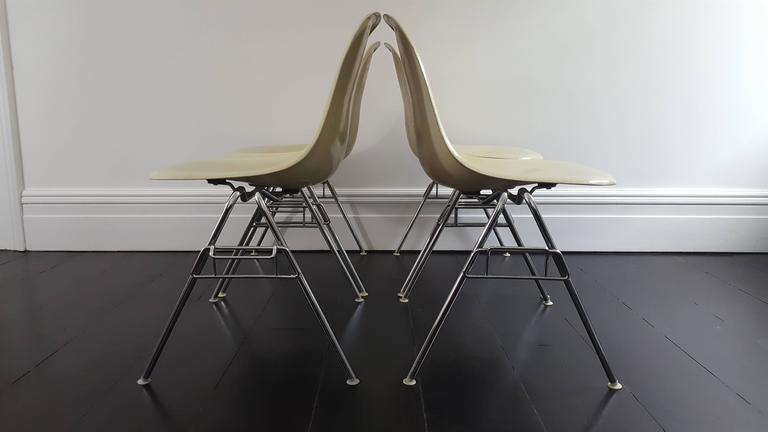 Original Parchment Charles & Ray Eames Fibreglass DSS Chairs for Herman Miller 6
