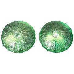 Ugo Correani Sea Urchin Earclips, Green