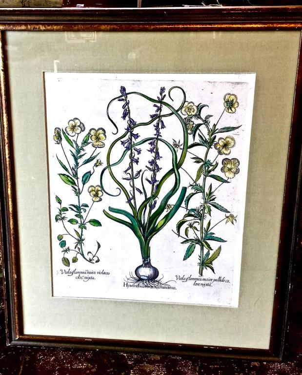 Beautiful original Basilius Besler engraving of Pansies and Hyacinth dating to 1613 with later hand-coloring.