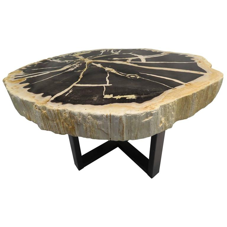 Indonesian Petrified Wood Side Table With Metal Black Powder Coated Base 1