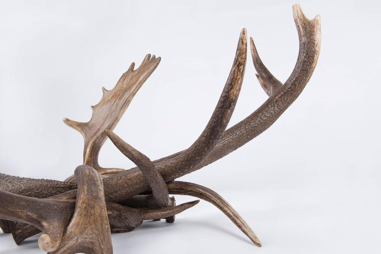Antler Coffee Table For Sale At 1stdibs