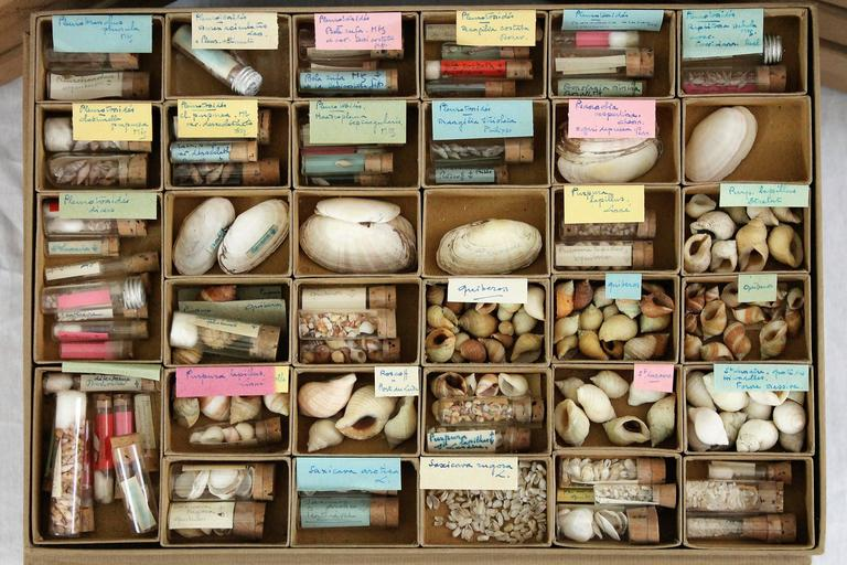 Collection of shells collected on the French and Mediterranean coasts including also some specimens from former French colonies. Collection assembled between the end of the 19th century and the beginning the 20th century.  Set composed of 73