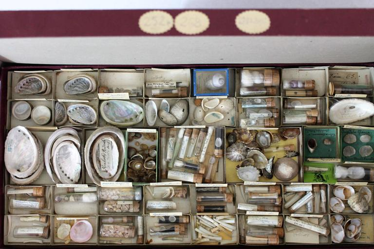 French Large Collection of Shells, End of 19th-Early 20th Century For Sale