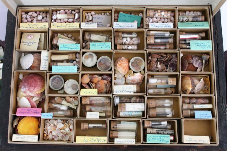 Large Collection of Shells, End of 19th-Early 20th Century In Good Condition For Sale In Beuzevillette, FR