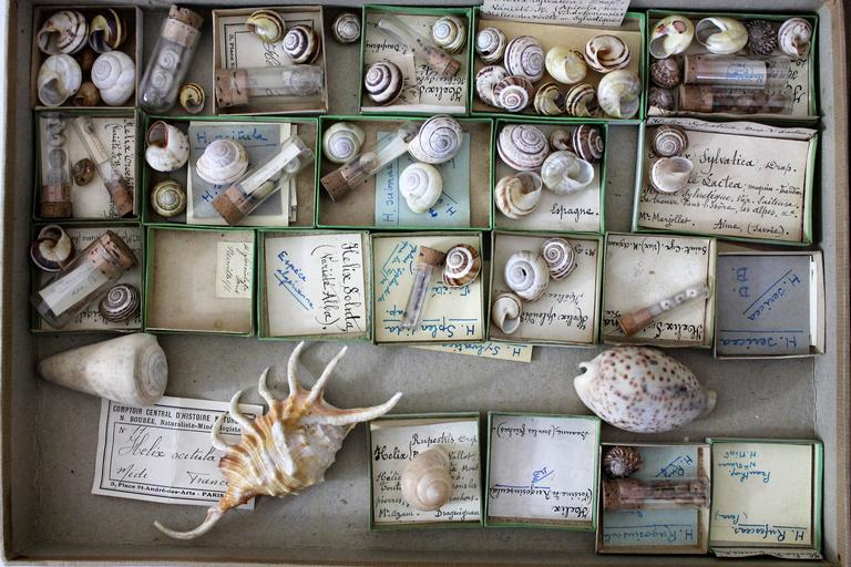 Large Collection of Shells, End of 19th-Early 20th Century For Sale 1