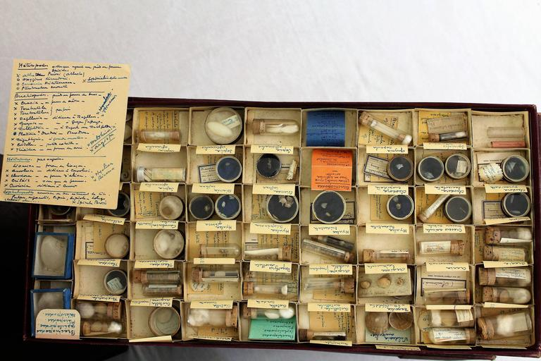 Large Collection of Shells, End of 19th-Early 20th Century For Sale 2