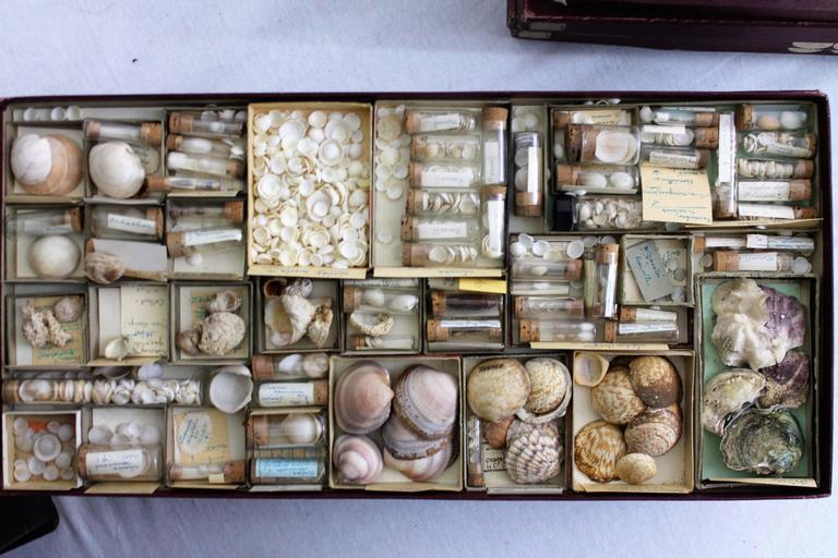 Large Collection of Shells, End of 19th-Early 20th Century For Sale 3