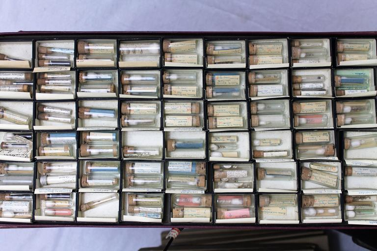 Large Collection of Shells, End of 19th-Early 20th Century For Sale 4