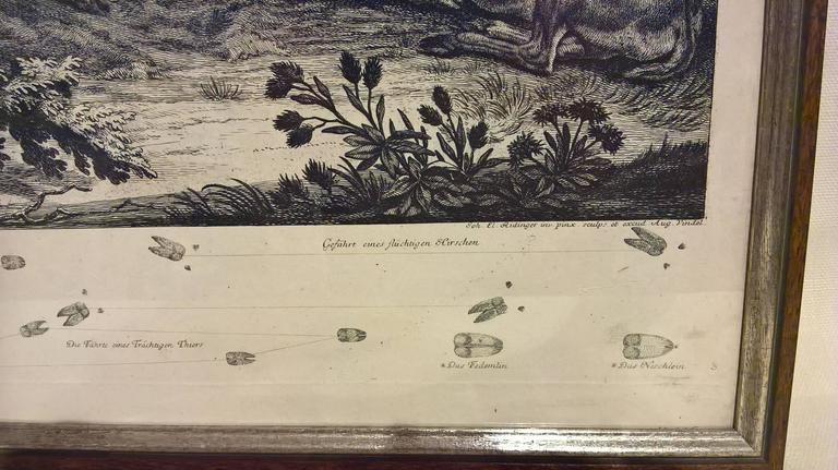 18th Century Black Forest Copperplate Johann Elias Ridinger with Hunting Scene 3
