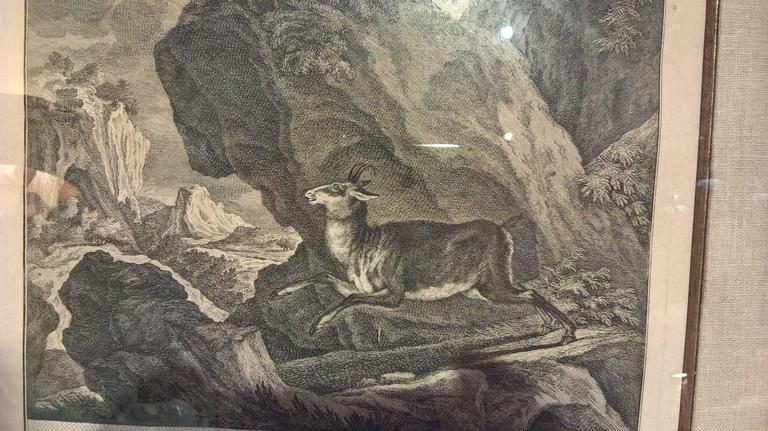 This 18 th century copperplate engraving from Johann Elias Ridinger shows a hunting scene with the title Spuhr einer Gembse (Chamois Tracks). It has a perfect linen passepartout and framed under glass in a wooden frame black and gold. Johann Elias