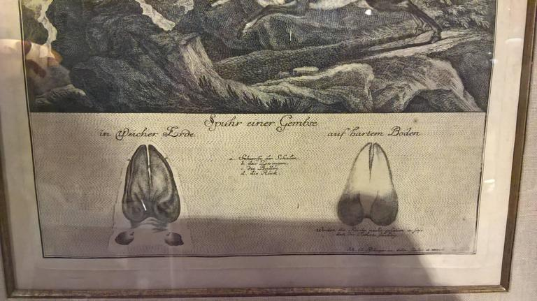 18th Century German Black Forest engraving by Johann Elias Ridinger In Excellent Condition For Sale In Kitzbuhel, AT