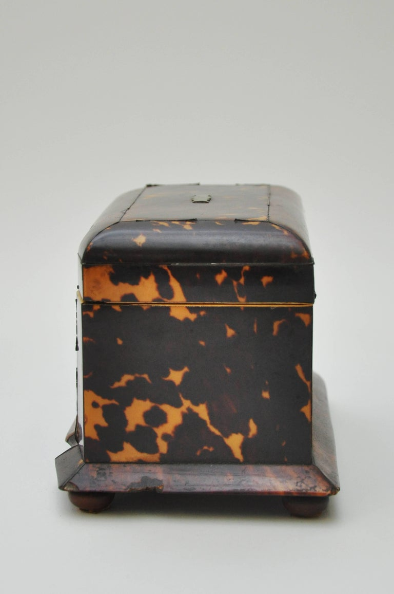 Tortoiseshell Tea Caddy 2