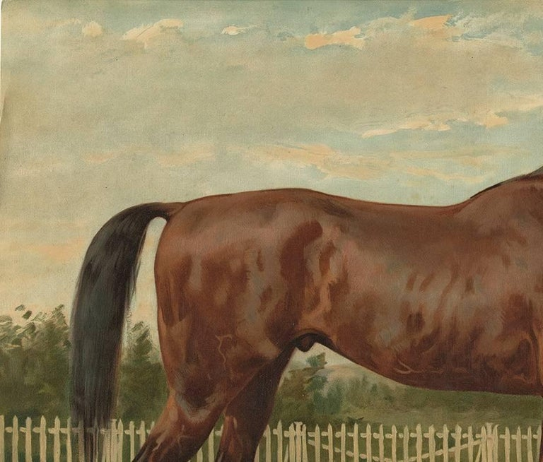Beautiful and decorative print of an English Thoroughbred published in 1898. These oleographs (type of lithograph) were originally part of the Dutch edition of 'Paardenrassen Kunstalbum', a portfolio with 41 prints based on paintings by Eerelman.