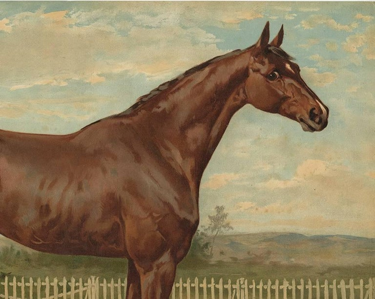 Dutch Antique Horse Print of an English Thoroughbred by O. Eerelman, 1898 For Sale