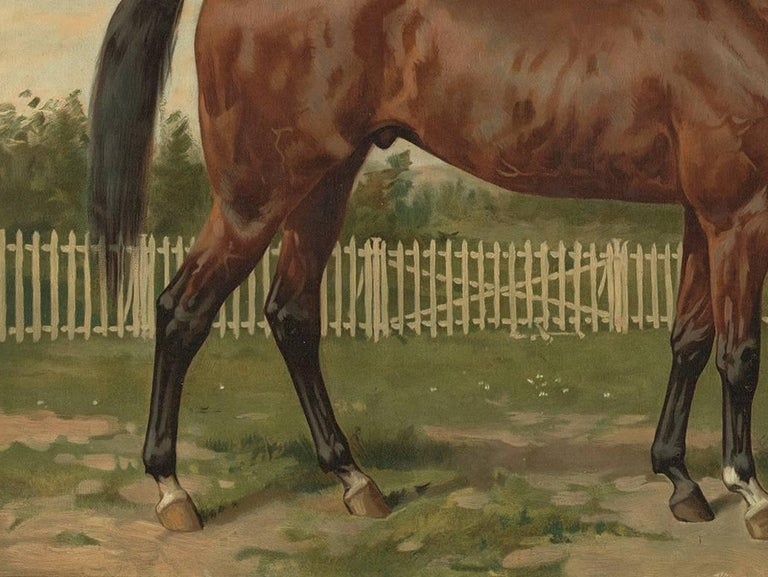 Antique Horse Print of an English Thoroughbred by O. Eerelman, 1898 In Good Condition For Sale In Langweer, NL