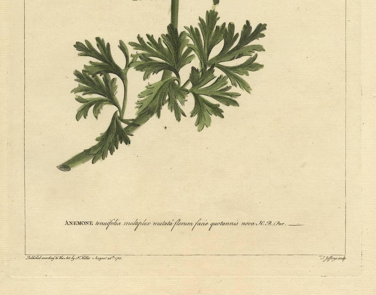 Antique Flower Print 'Anemone' by P. Miller, 1755 In Good Condition For Sale In Langweer, NL