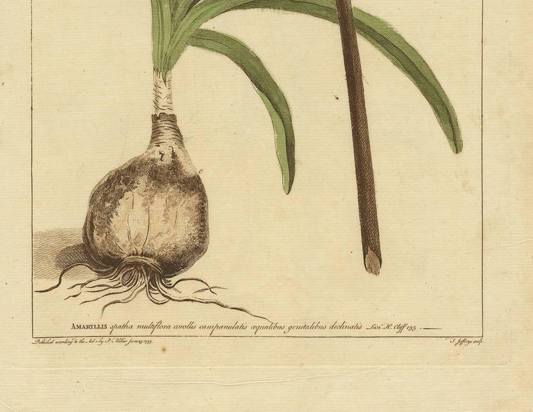 Antique Flower Print 'Amaryllis' 'No.2' by P. Miller, 1755 In Good Condition For Sale In Langweer, NL