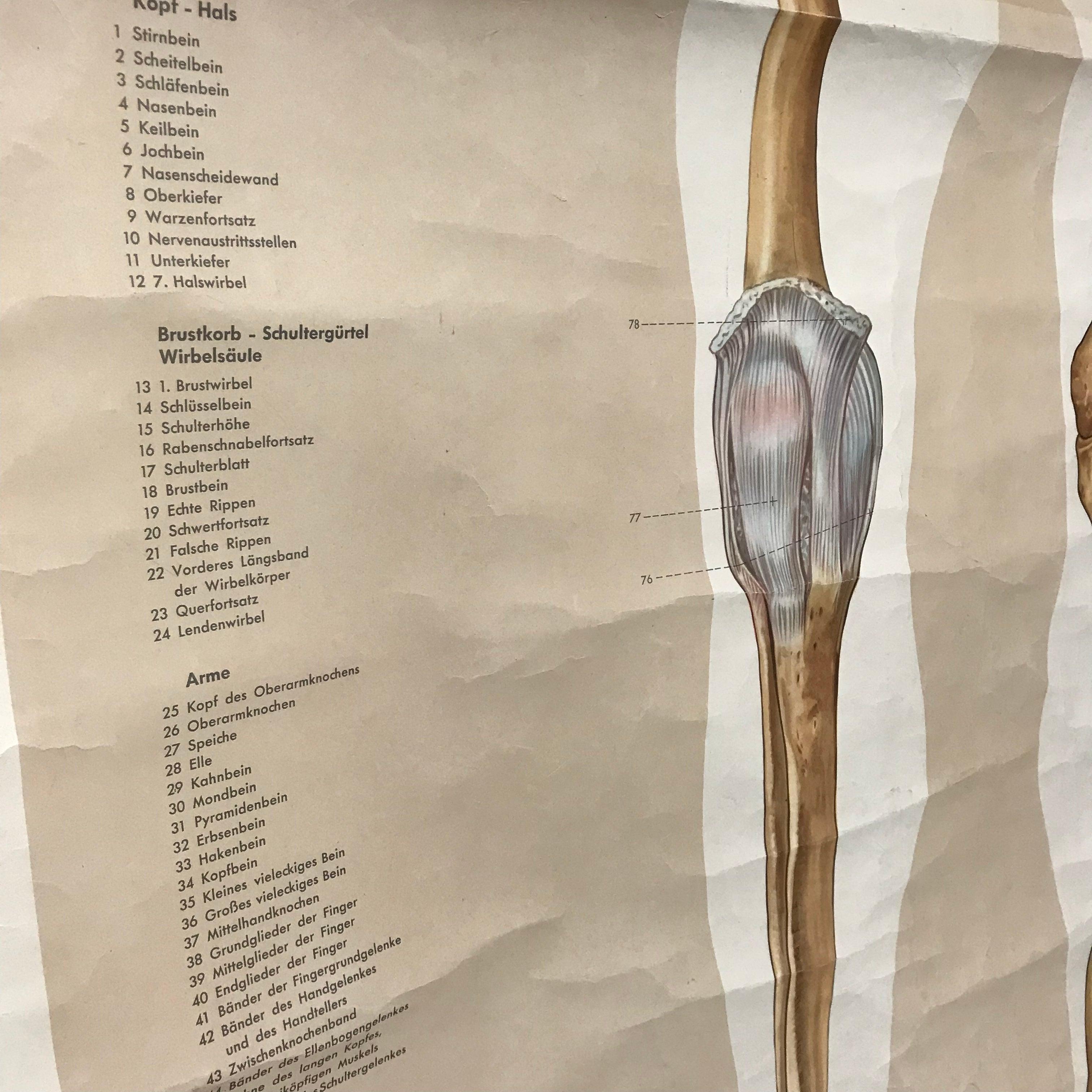 Gemütlich Oberarmknochen Bilder Ideen - Menschliche Anatomie Bilder ...