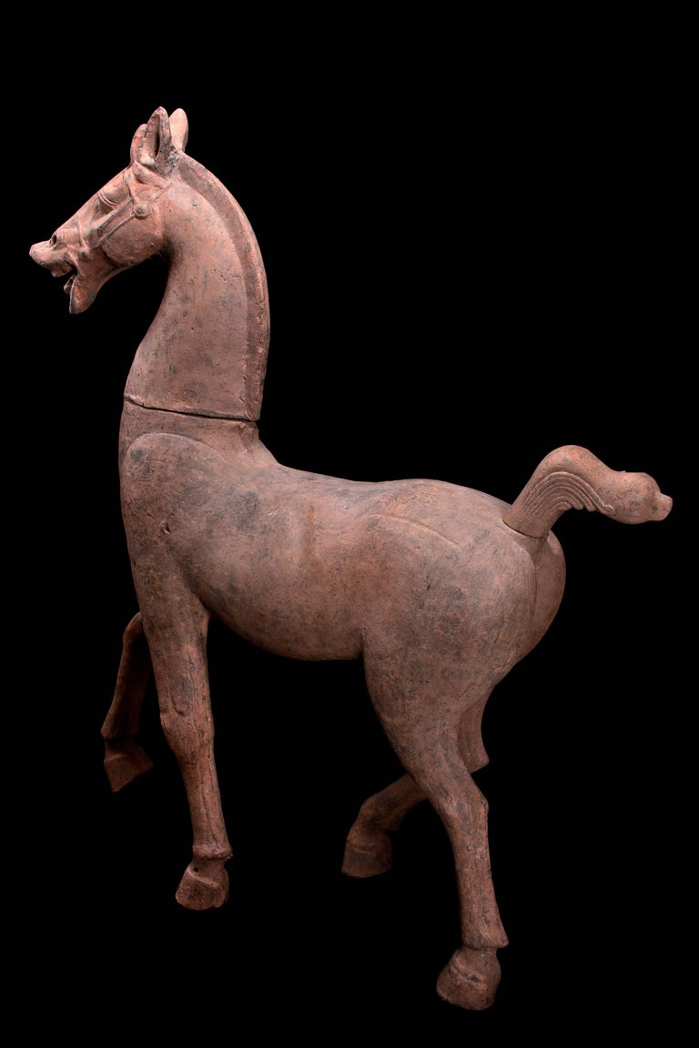 Monumental Han Dynasty Terracotta Horse - TL Tested - China, '206 BC–220 AD' For Sale 4