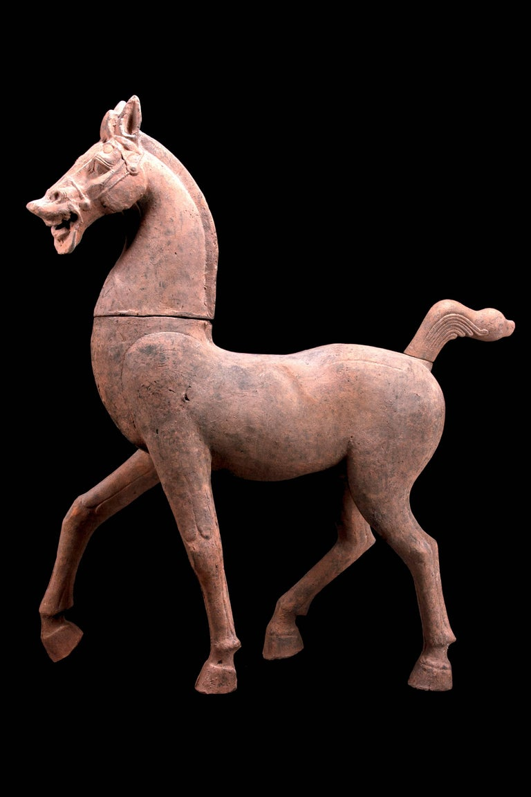Monumental Han Dynasty Terracotta Horse - TL Tested - China, '206 BC–220 AD' For Sale 2