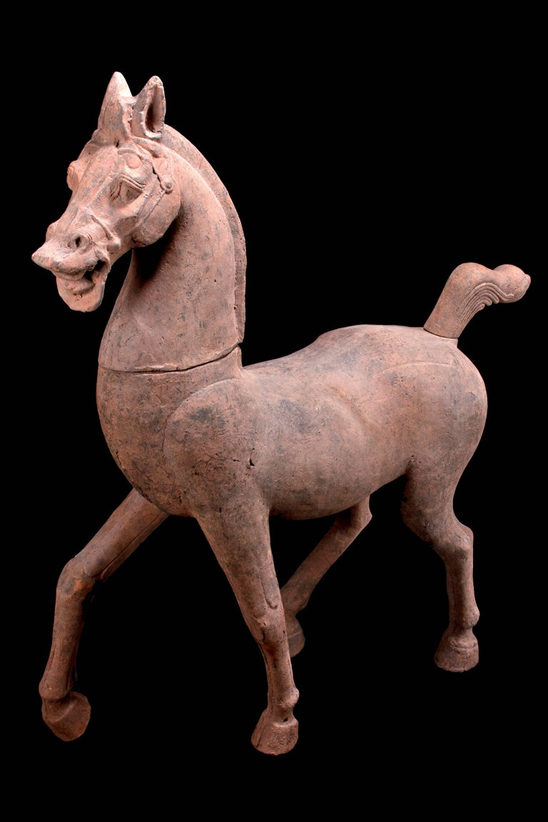 Monumental Han Dynasty Terracotta Horse - TL Tested - China, '206 BC–220 AD' For Sale 3