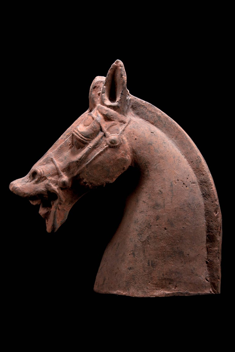 Monumental Han Dynasty Terracotta Horse - TL Tested - China, '206 BC–220 AD' In Excellent Condition For Sale In San Pedro Garza Garcia, Nuevo Leon