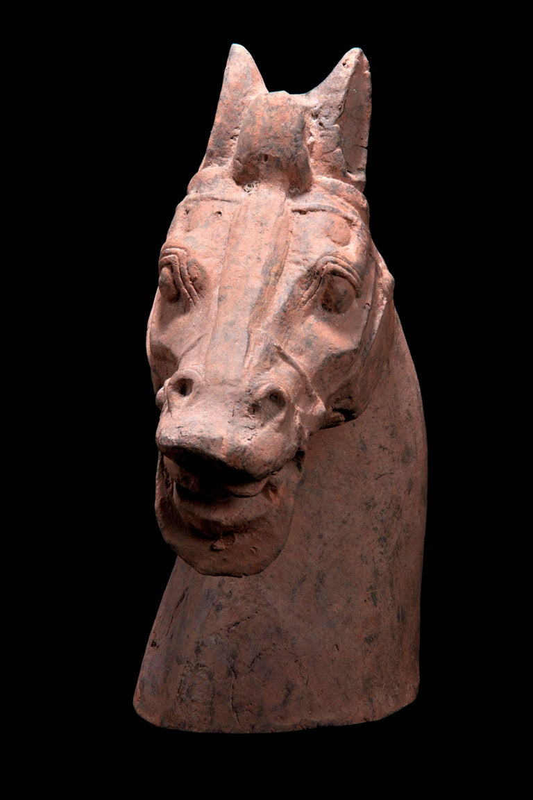 A massive pottery horse with separately made head and tail, standing on all fours and striding with its right hoof forward. Extended snout ends in parted lips showing teeth beneath in a braying attitude. Low relief bridle on face and well defined