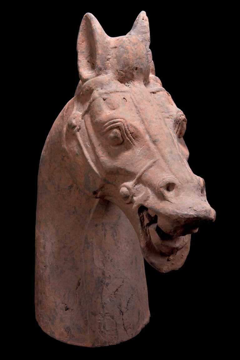 Chinese Monumental Han Dynasty Terracotta Horse - TL Tested - China, '206 BC–220 AD' For Sale