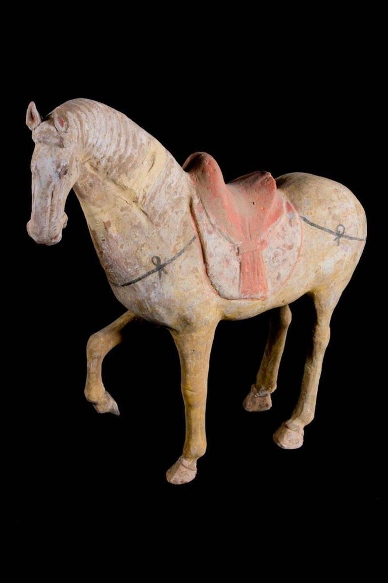 Magnificent Tang Dynasty Prancing Horse, TL Test by ASA Francine Maurer For Sale 1