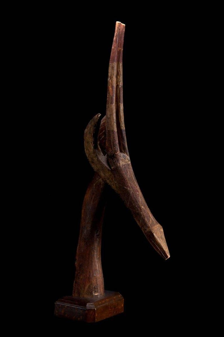 A beautiful stylized antelope head used as headdress on ceremonial dances. Retains the old painting and patina over the carved wood. Traded by a professor working in Africa in the 1950's and then in a French private collection.  Burkina Faso,