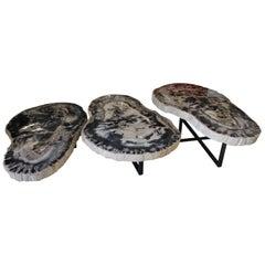 Large Petrified Wood Coffee Table