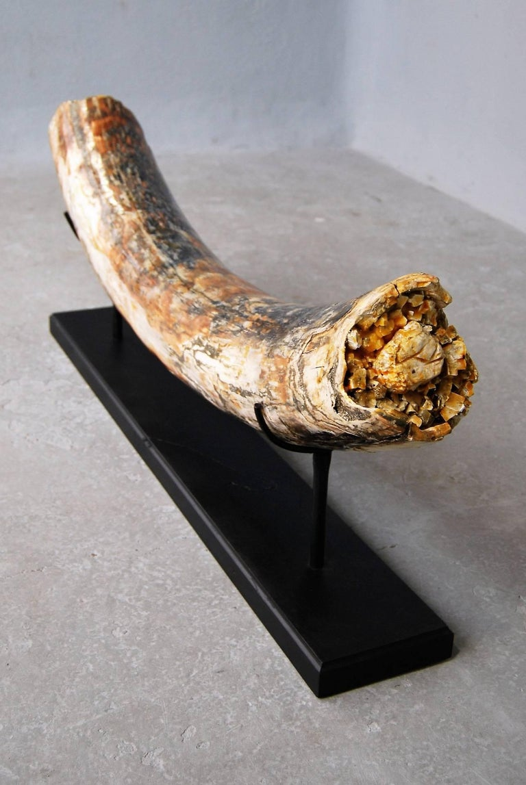 Large Piece of Mammoth Tusk