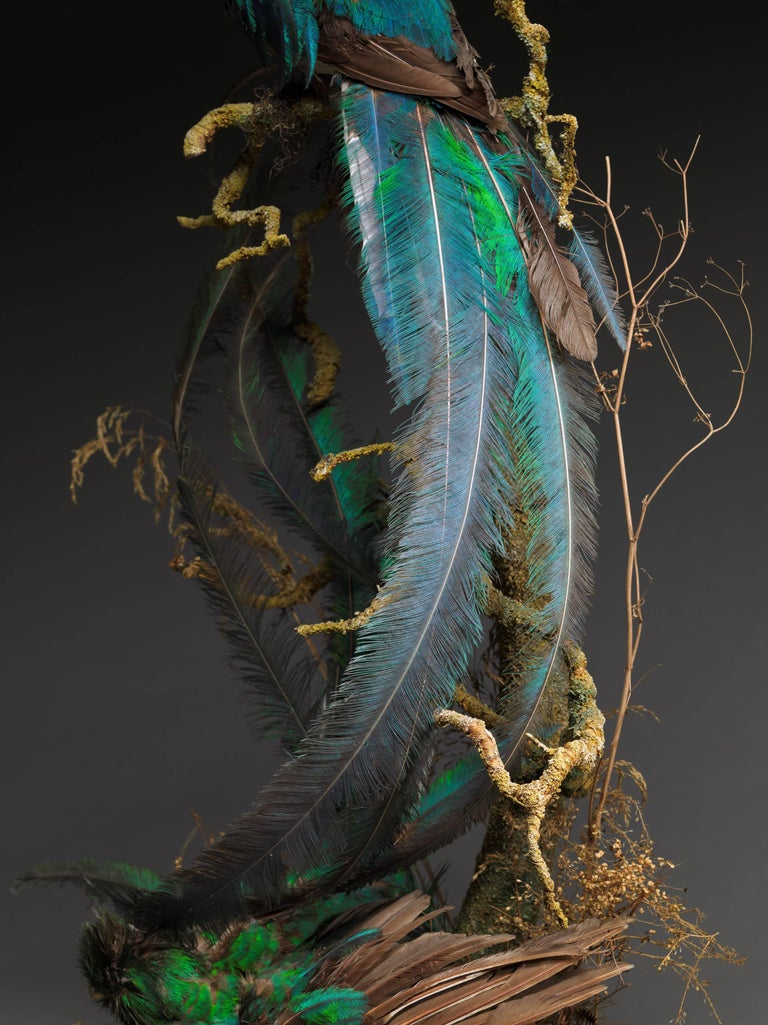 Animal Skin Victorian Dome of 2 Taxidermy Male Pharomachrus Mocinna 'Resplendent Quetzal' For Sale
