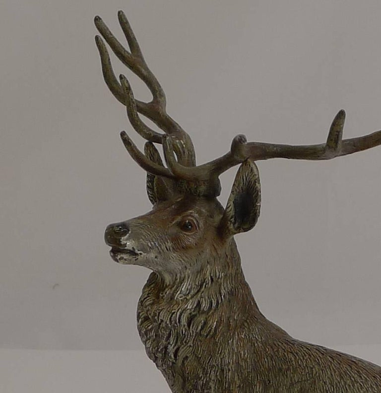 Late 19th Century Large Antique Austrian Cold Painted Bronze Stag Figure c.1890 For Sale