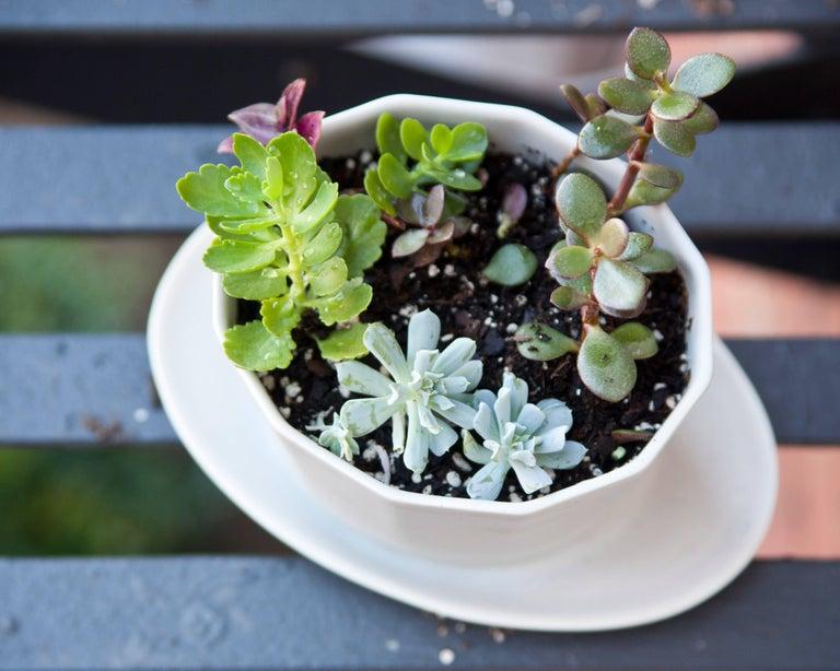 Native Planter Matte Pink Planter Modern Contemporary Glazed Porcelain For Sale 9