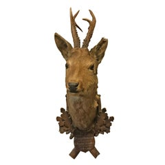 19th Century Austrian Roe Deer Trophy Mount