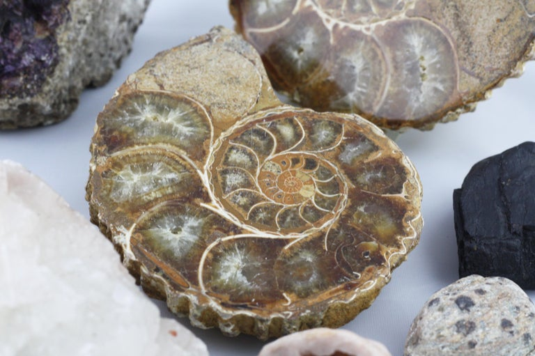 Collection of Rock Fossils Including Blue John and an Ammonite In Good Condition For Sale In Tetbury, GB