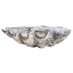 Giant Clam Shell Basin