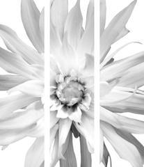 Flower Triptych Print