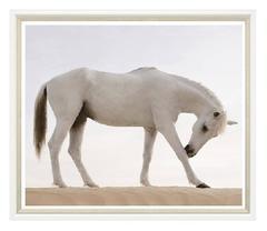 Desert Horse Print